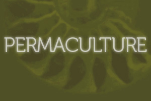 Permaculture Design San Francisco Bay Area San Rafael CA and Mexico